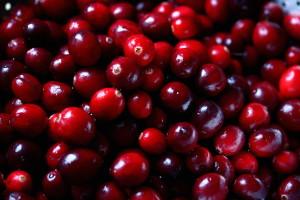 damp cranberries2